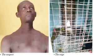 Man locks up wife for four years, subjecting her to dehumanizing conditions