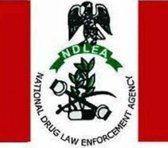 NDLEA Intercepts Nigerian drug trafficker who hid cocaine in t-shirts (photo)