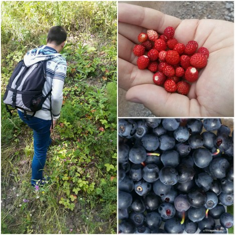 Picking berries at the Nuuksio National Park