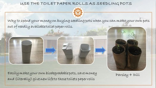 toilet paper seedling pot