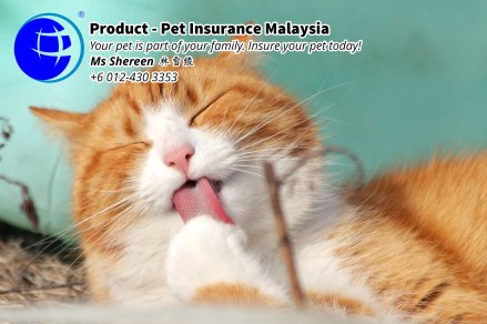 Pet Insurance Malaysia Johor Batu Pahat Agensi Pekerjaan Unilink Prospects SB Wisma V Cat Insurance Malaysia Dog Insurance Malaysia Johor Batu Pahat Your pet is part of your family Insure your pet today A06