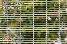 BP Wijaya Trading Sdn Bhd 马来西亚 彭亨 关丹 淡马鲁 文德甲 安全 篱笆 制造商 提供 篱笆 建筑材料 给 发展商 花园 公寓 住家 工厂 果园 社会 安全藩篱 建设 A01-27