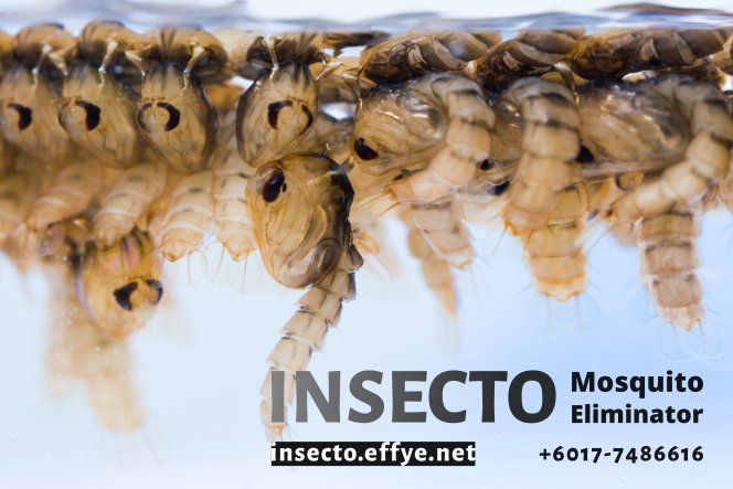 18955909 - close up mosquito pupae underwater