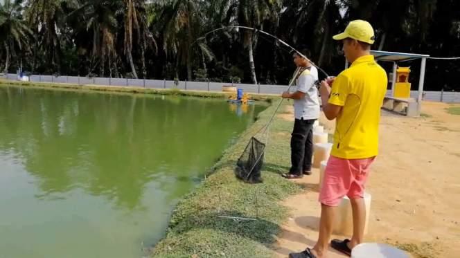 Kolam Memancing Simpang Sikon - Kolam Memancing Ikan Parit Raja Batu Pahat Johor Malaysia B11