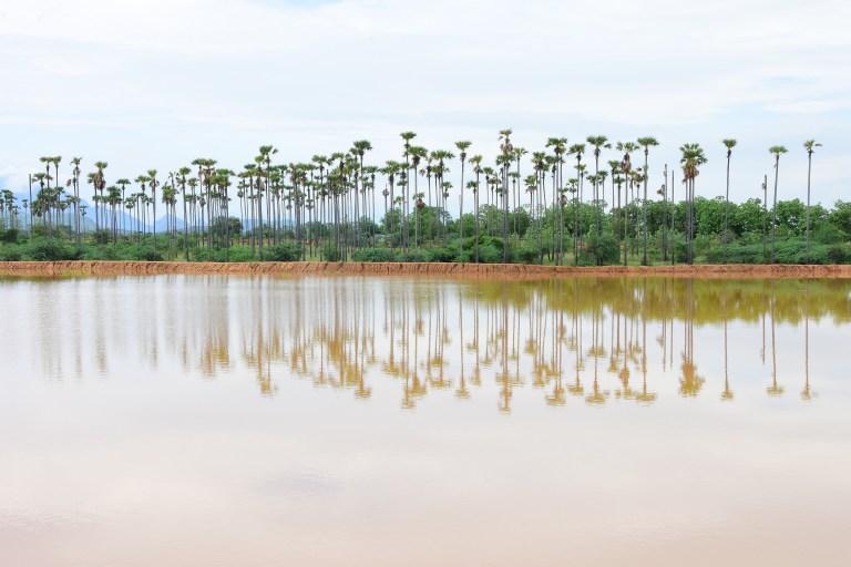 Ambur Lake After