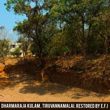 Dharamaraja Kulma 1