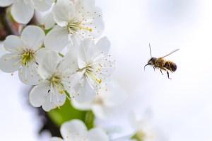 flower, bee, macro