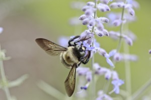 bee, flower, insect