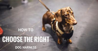 choose-the-best-dog-harness