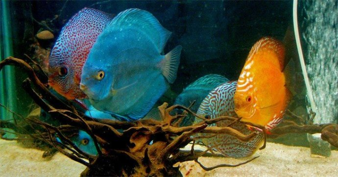 top 25 aquarium blogs3
