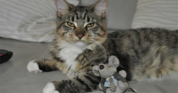 Cat Toys 1