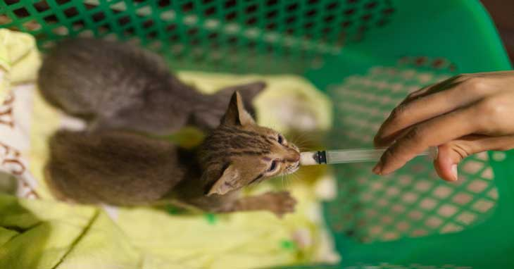 How To Syringe Feed Your Cat