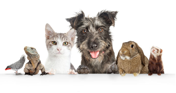behavior of your pets and act accordingly