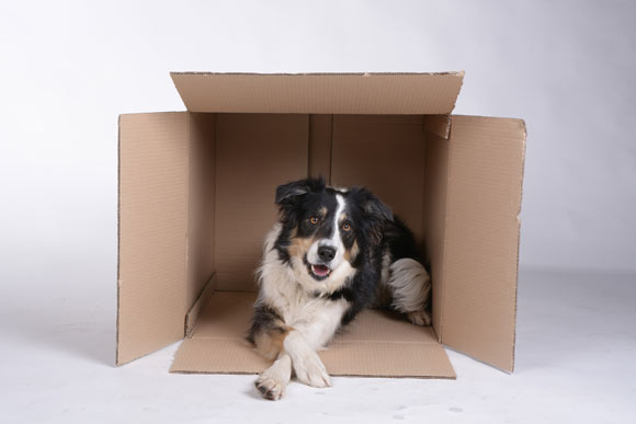how to choose best dog box