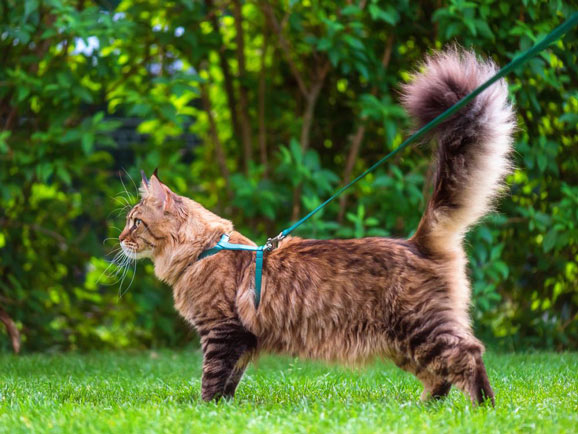 Best Harness and Leash for Cats
