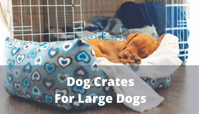 dog crates for large dogs