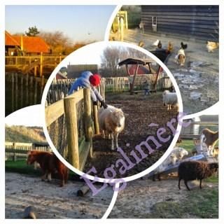 Ferme Zandvoort Center Parcs en famille