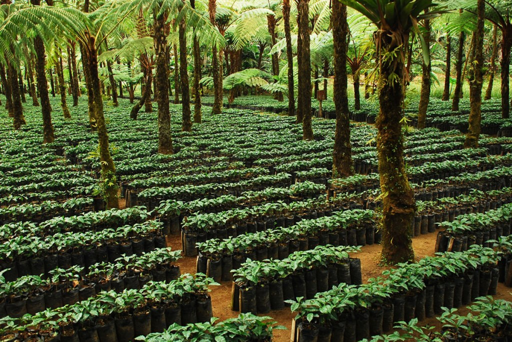 Certified Coffee eco-labels greenwashing