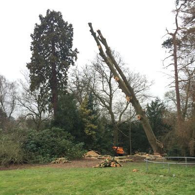 shropshire tree surgery