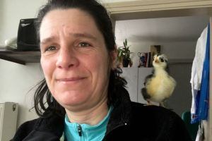 Baby chick on a woman's shoulder