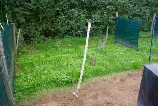 The grass has grown back in the chicken run
