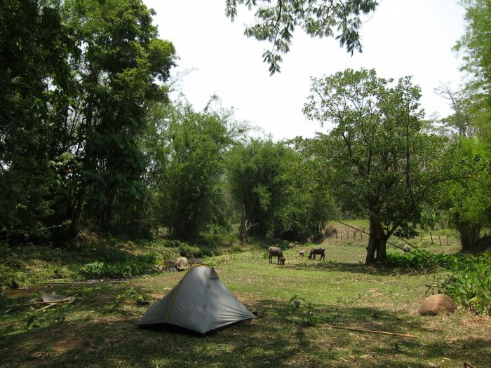 Camping with the buffao in Chiang Dao