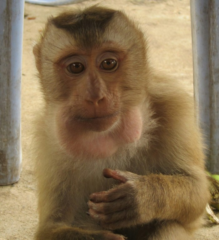 We held a 'Most Expressive Eyes' competition with several macaques. This one was the winner.