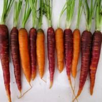 Carrot + Zucchini Oat Bran Muffins