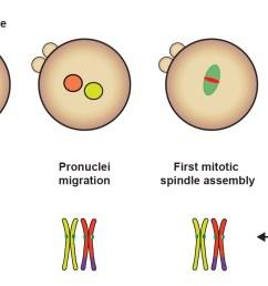 diagram step of meiosi [ 1957 x 734 Pixel ]