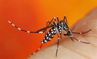 Bite Back Against Mosquitoes with These Prevention Tips