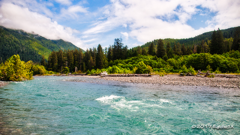 Hoh River and Rainforest