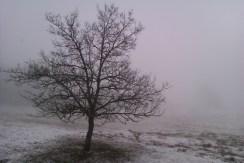 Maierhöfen. L'hiver touche lentement à sa fin. Photographie prise au petit matin depuis la cuisine de notre bungalow. Altitude : environ 750 m.
