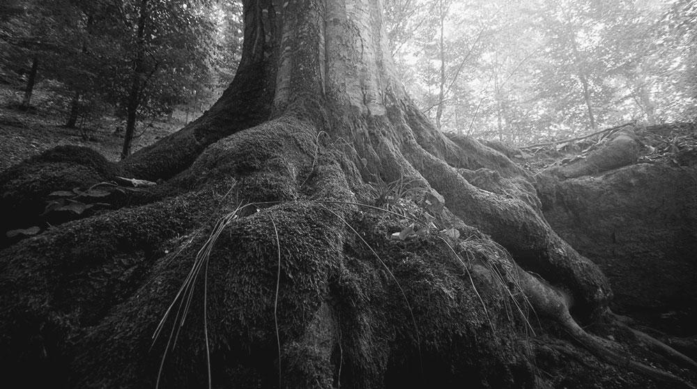 arbre-mlk-vie