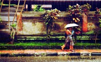 bali-ubud-rain