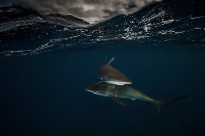 Below Sea Level-Requin2