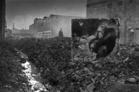 ALLEYWAY-WITH-CHIMPANZEE