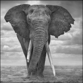 Elephant-Sails