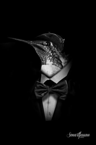 fantasmagorik-square-smart-faune-colibri