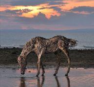 sculptures-animaux-bois-james-doran-webb-4-720x665
