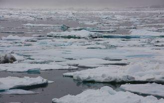 Banquise_île_Hans_sl_GreenlandPolarFloes