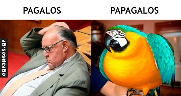 pagalos papagalos