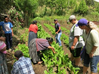 Ladies gathering up some swiss chard to send home with us