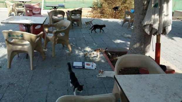 القطط فى النادى