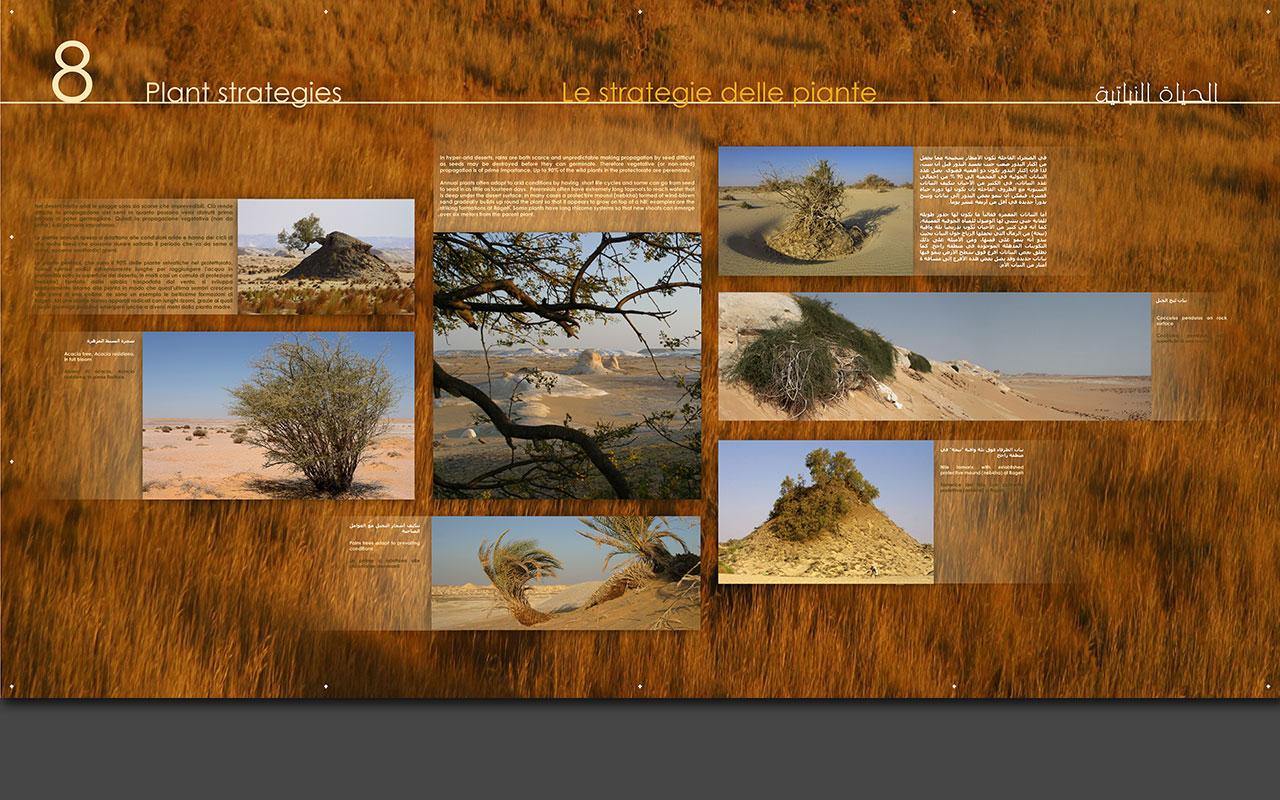 White Desert Exhibits
