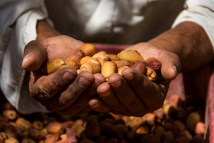 Agriculture in Siwa revolves around dates and olives