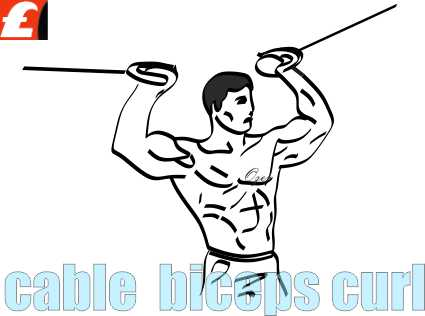 Cable Cross Over Biceps Curl Resimli