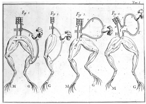 M0012614 Sciatic nerve, Galvani Credit: Wellcome Library, London. Wellcome Images images@wellcome.ac.uk http://wellcomeimages.org Galvani's experiments on the sciatic nerve of frogs; first detection of galvanic currents. Memorie sulla elettricita animale Galvani, Luigi Published: 1797 Copyrighted work available under Creative Commons Attribution only licence CC BY 4.0 http://creativecommons.org/licenses/by/4.0/