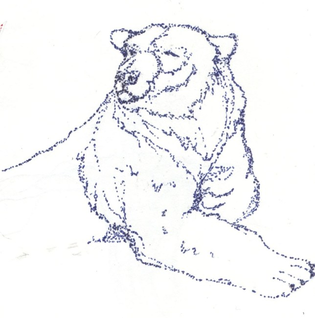 Polar bear stipple pen drawing