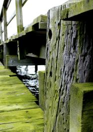 Dock Algae