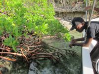Dante looks at all the fish in the mangrove nursery by Crab Cay.